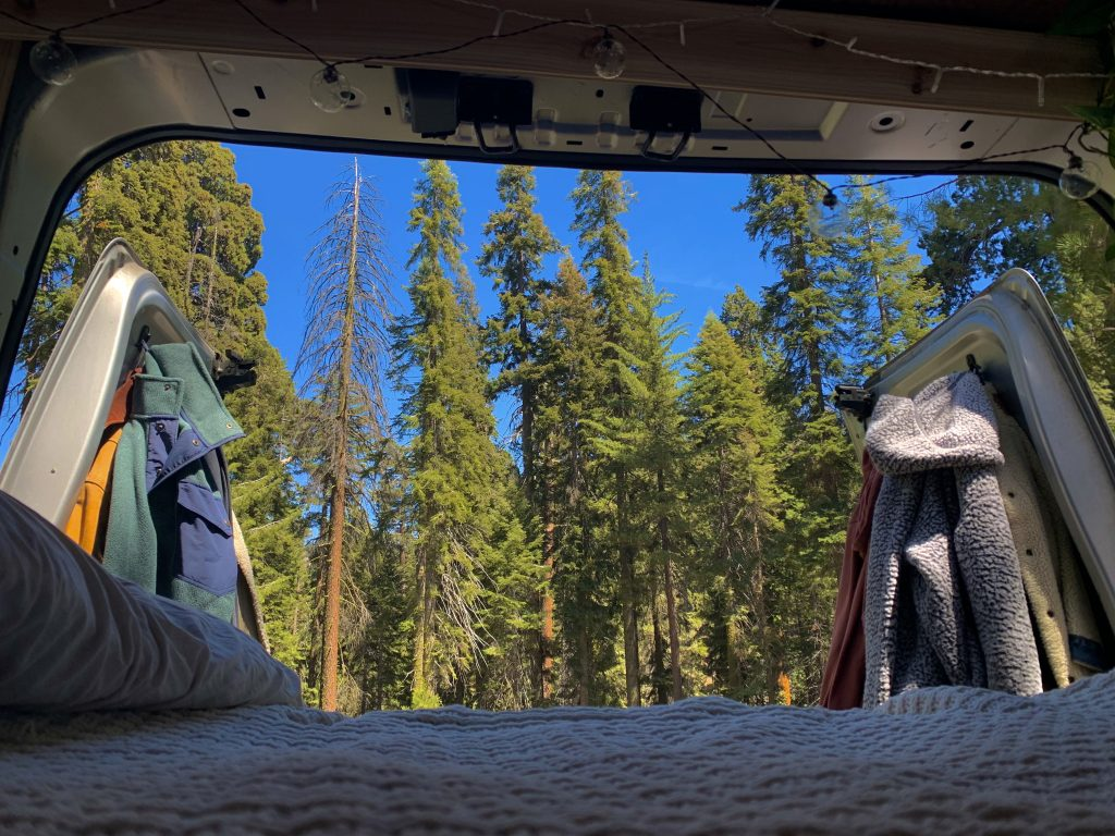 view of trees from inside of van